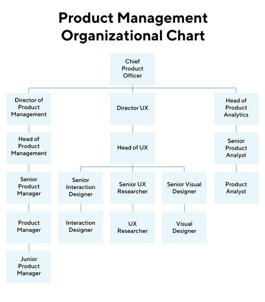 Кем руководит CPO. Источник: ProductPlan
